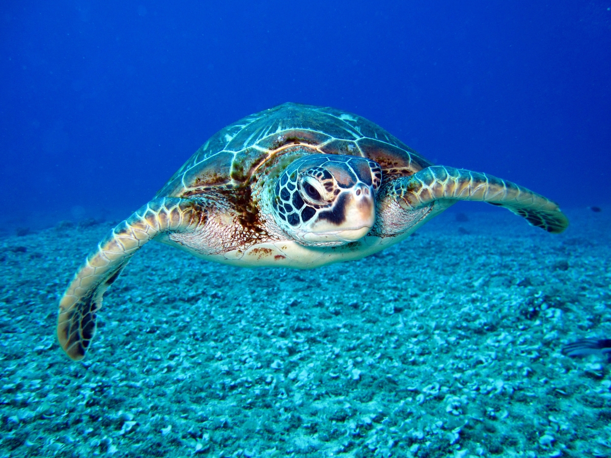 Q&A: Making the Case for Mobile Marine Protected Areas